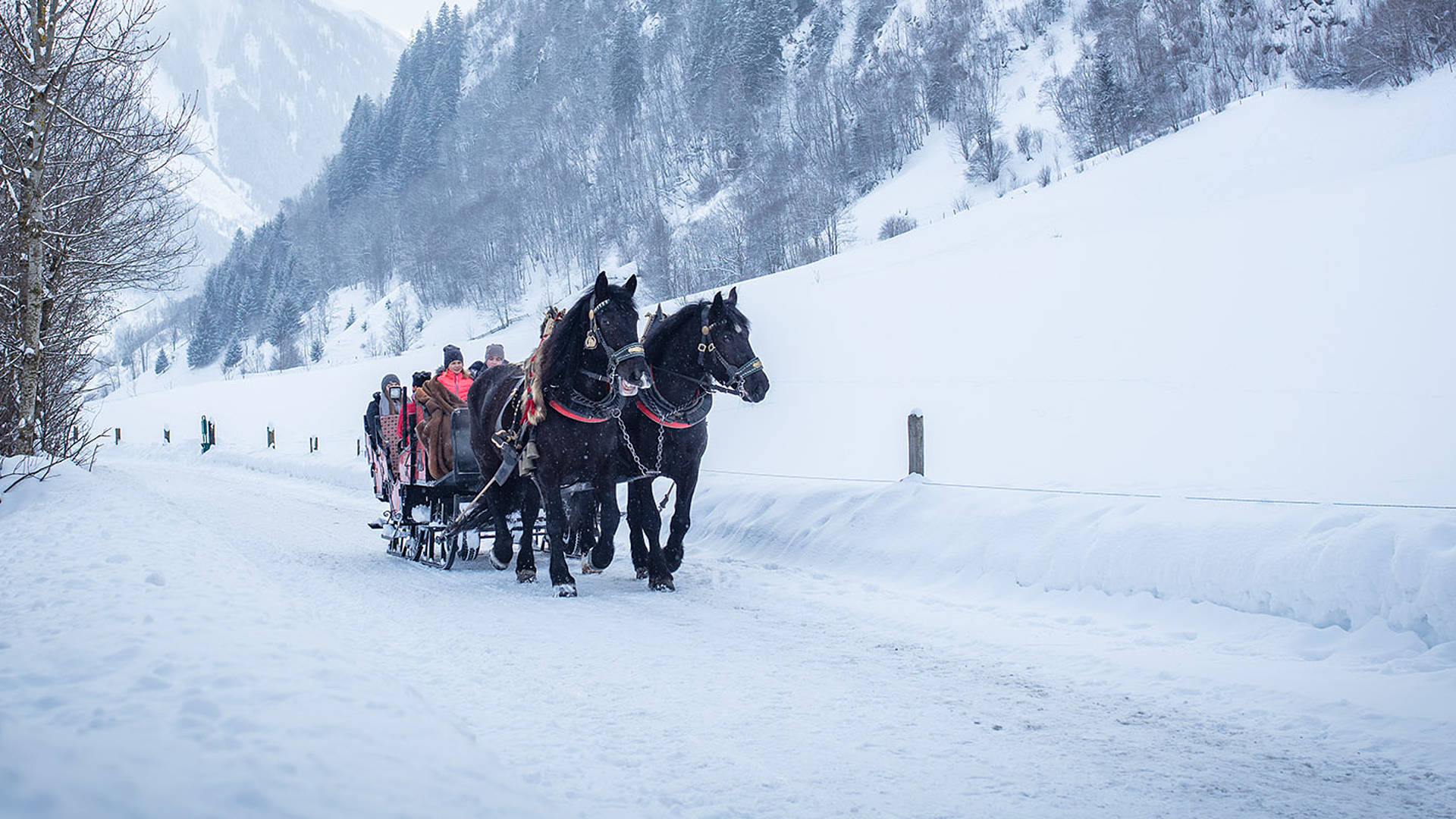 Sleigh Rides Rauris Valley Holiday In The Austrian Alps